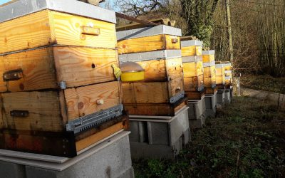 France – Pascal: 8 hives monitored with the BS4X-8 – Wifi digital beehivescale