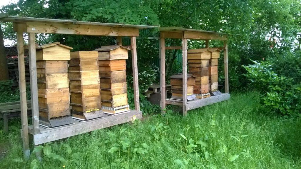 Klaus, ruches Warré, balance de ruche, Beescale