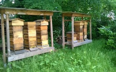 Germany – Klaus: 4 Warré Beehives followed by BS4M digital beehive scale