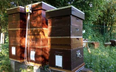 Belgium – Philippe : Extension from 4 up to 12 hives equiped with digital hive scale in the same apiary