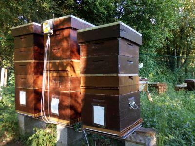 Philippe - Belgique - Balance de ruche - BS4X-12
