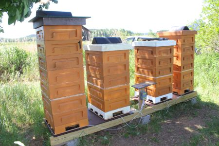 Ville - Finlande - Balance de ruche - BS4M