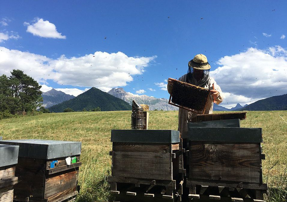 France – David :  Beehives fixed on  pallets monitored by the BS4M – Sigfox beehive scale