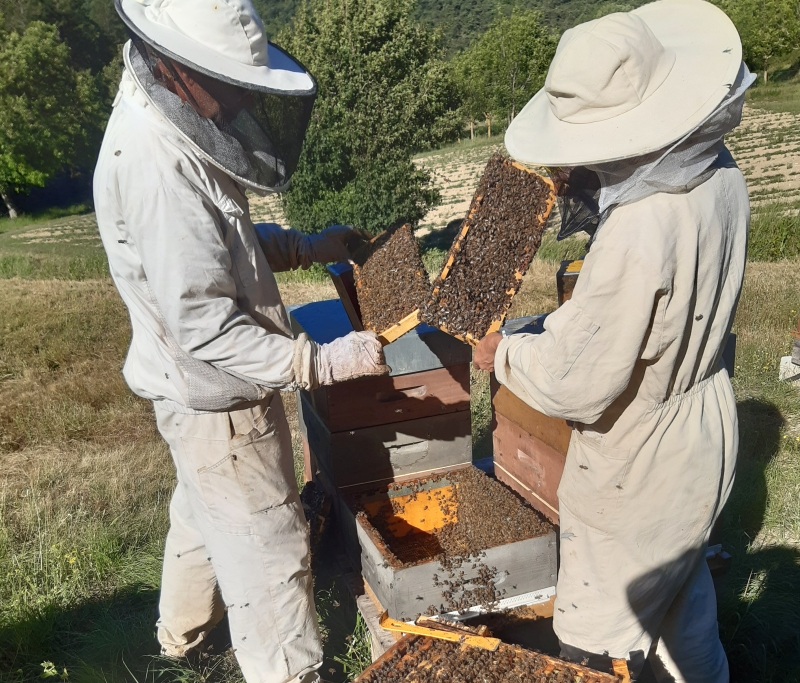 apiculteurs au rucher