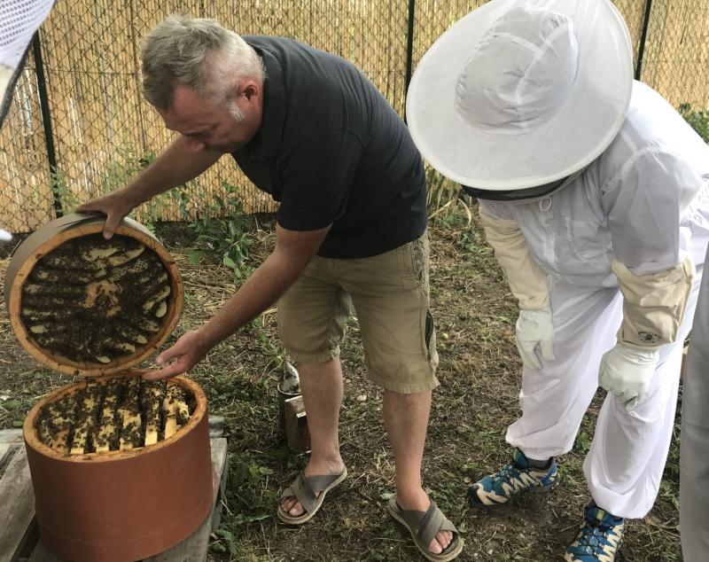 collecte du miel