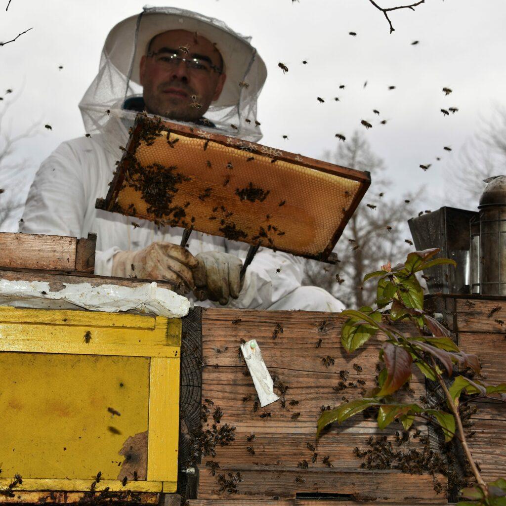 Balance de ruche, BS4X - 8 ruches