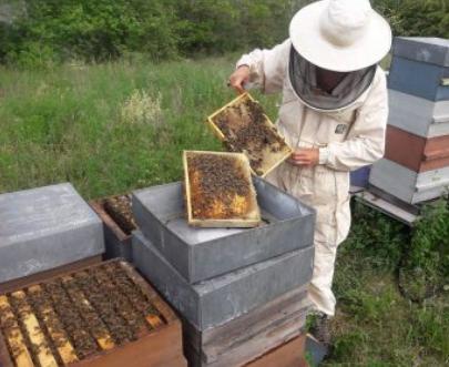 apiculteur en combinaison de travail